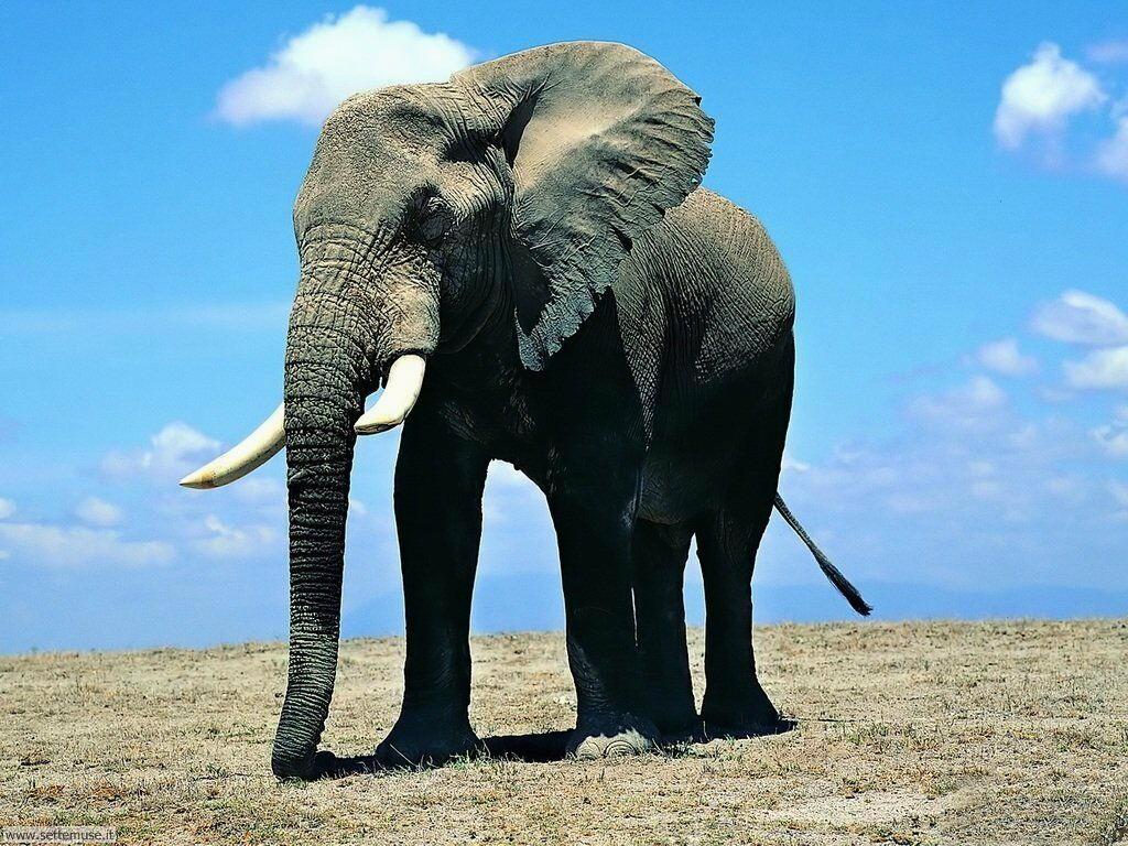 Foto Elefanti 004