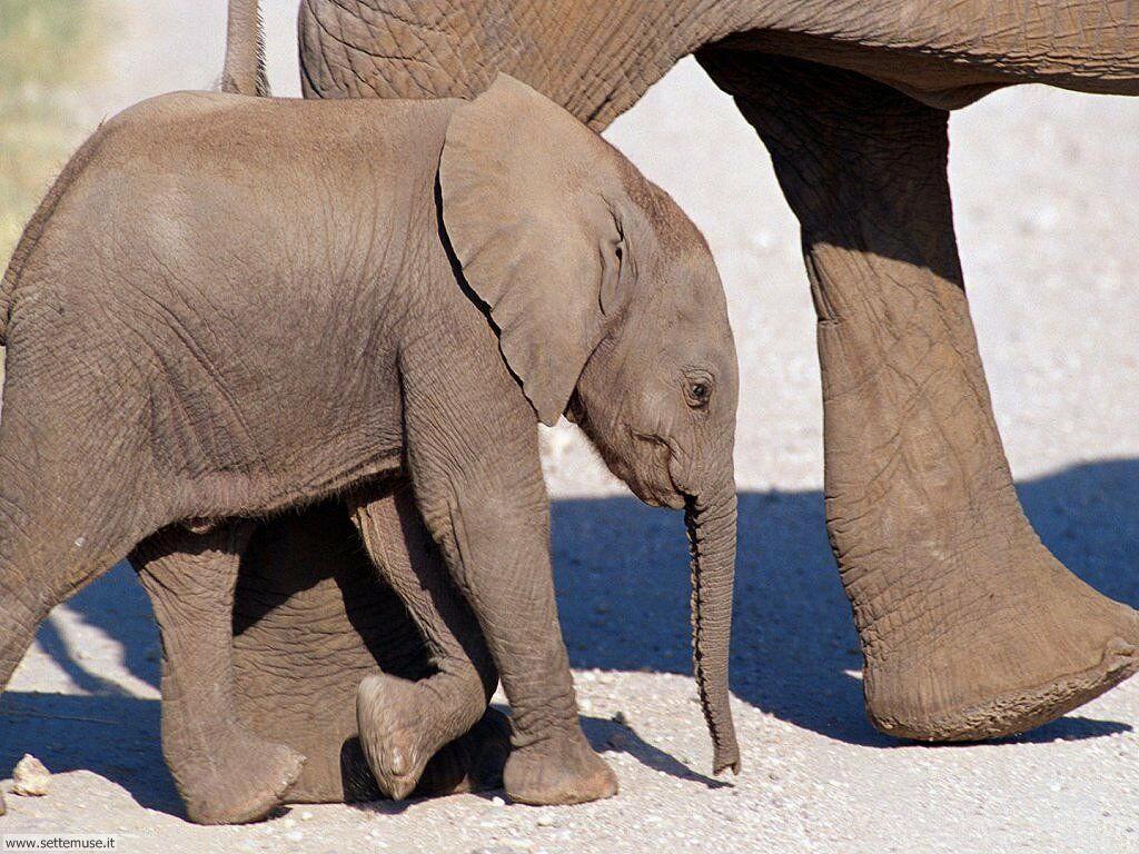 Foto Elefanti 005