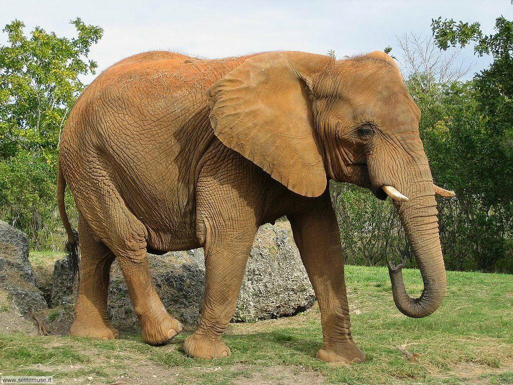 Foto Elefanti 006
