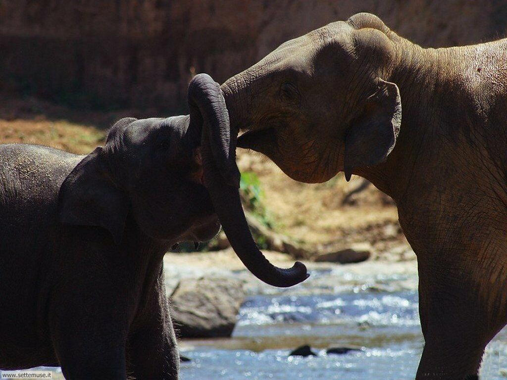 Foto Elefanti 007