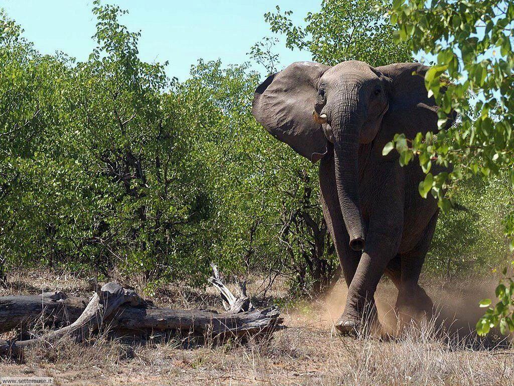 foto di elefante o elefanti con elefantini per sfondi