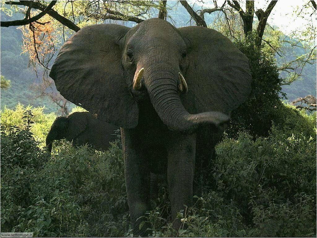 Foto Elefanti 009