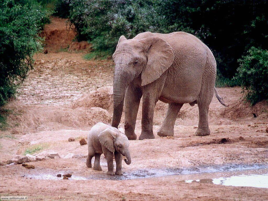 Foto Elefanti 010