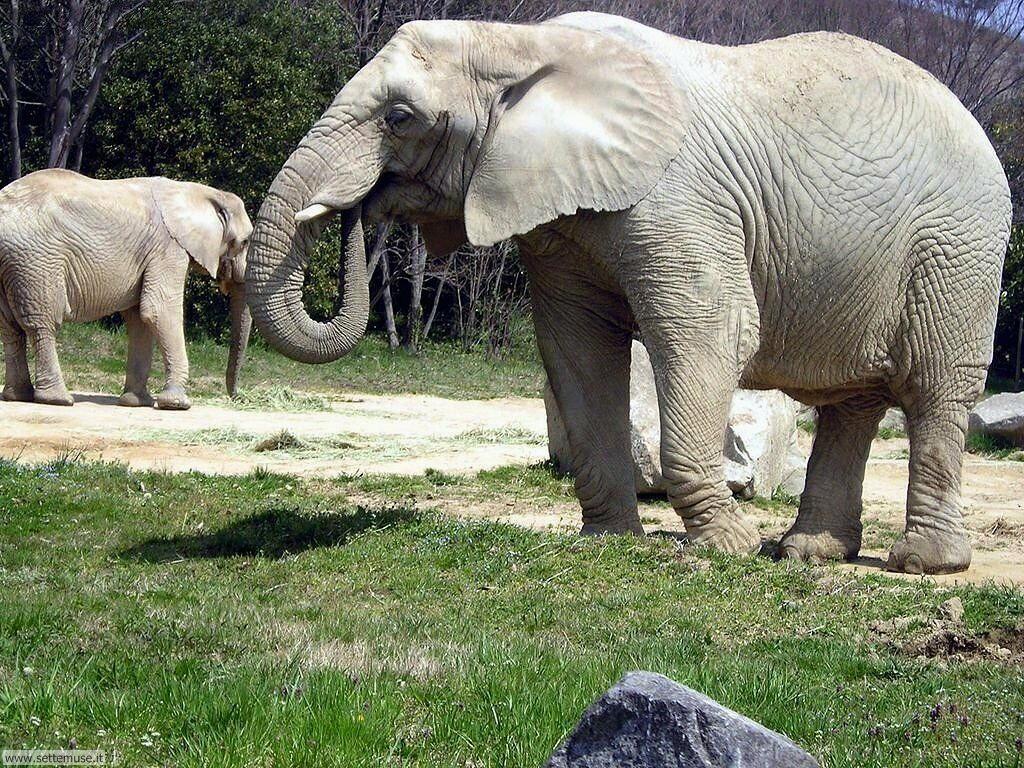 Foto Elefanti 011