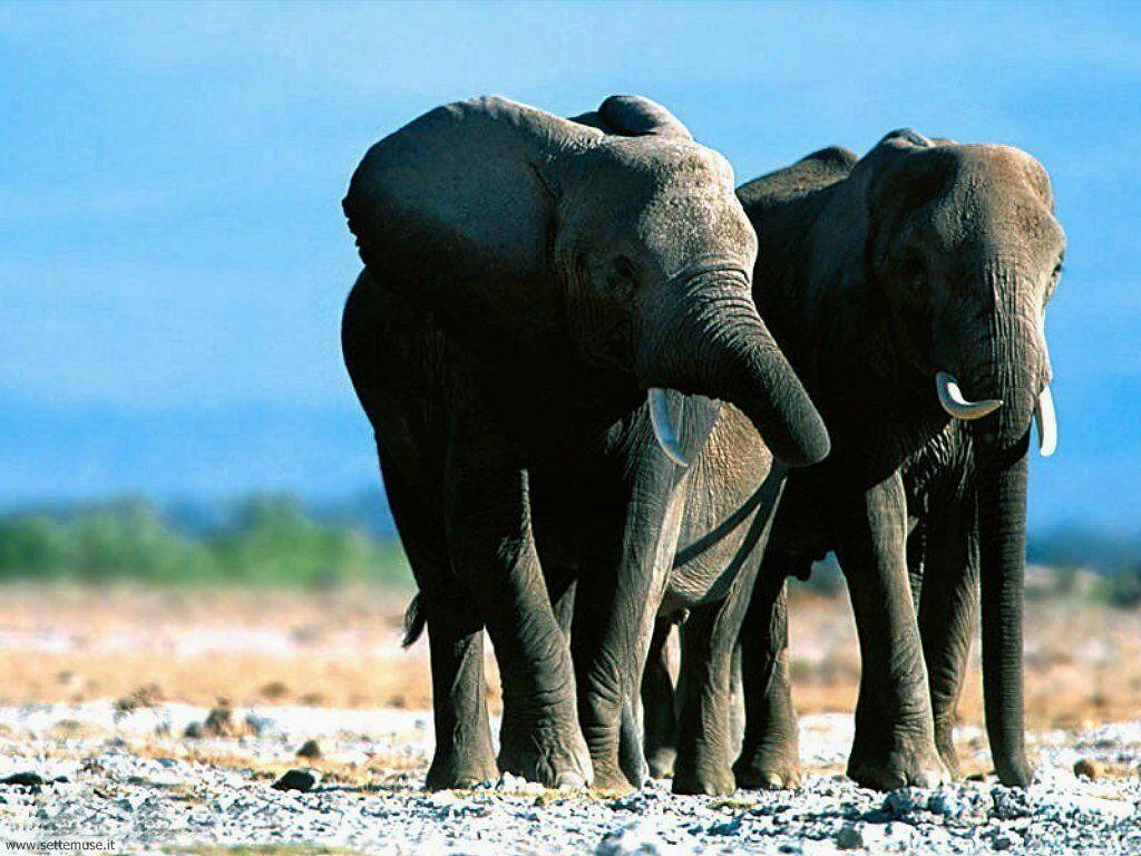 Foto Elefanti 012