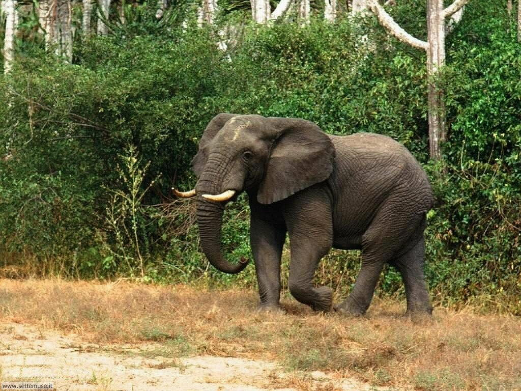 Foto Elefanti 013