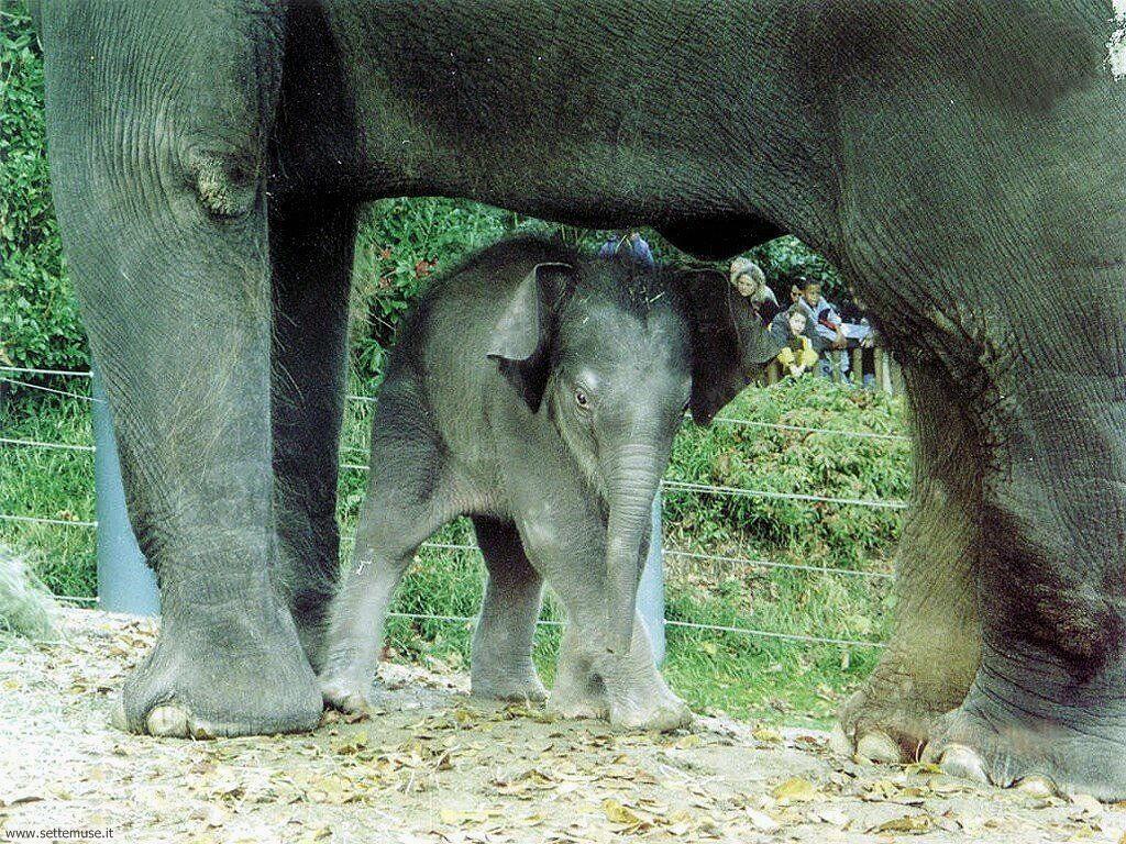 Foto Elefanti 014