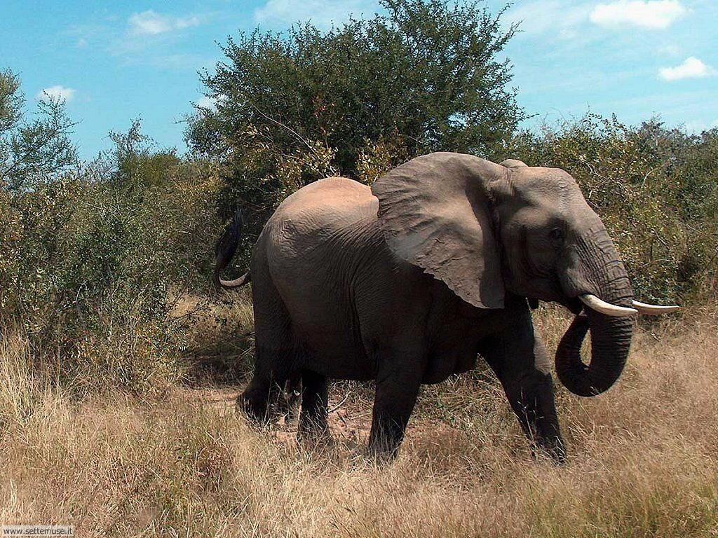 Foto Elefanti 016