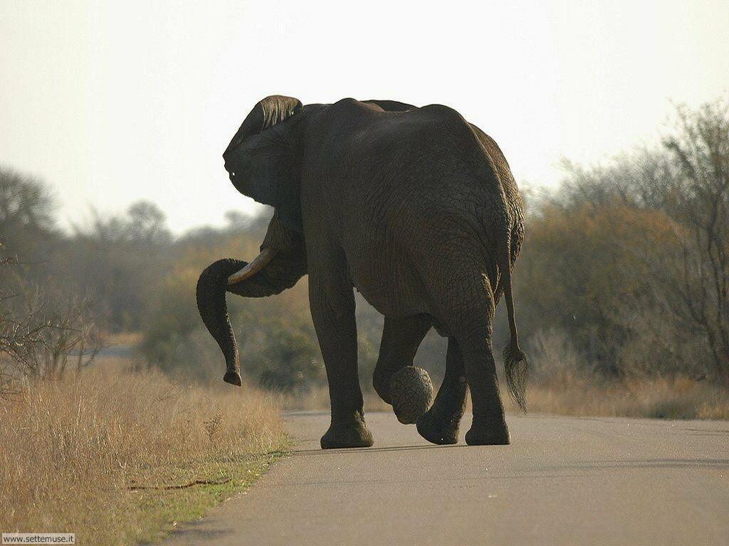 Foto Elefanti 017