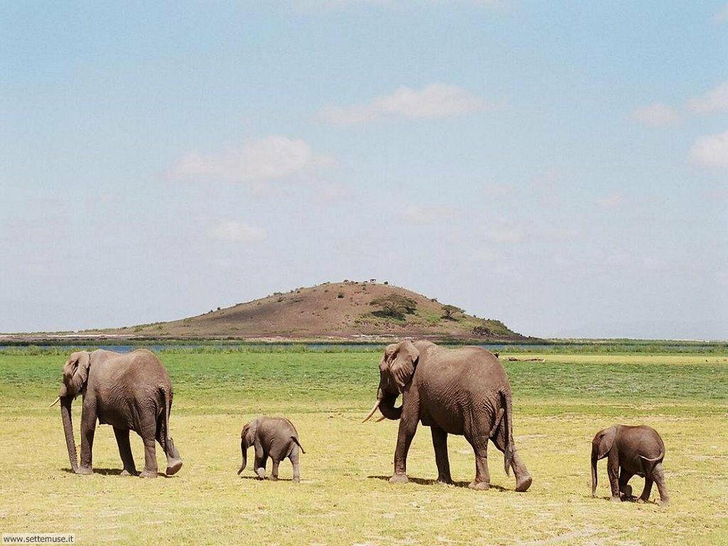 Foto Elefanti 018