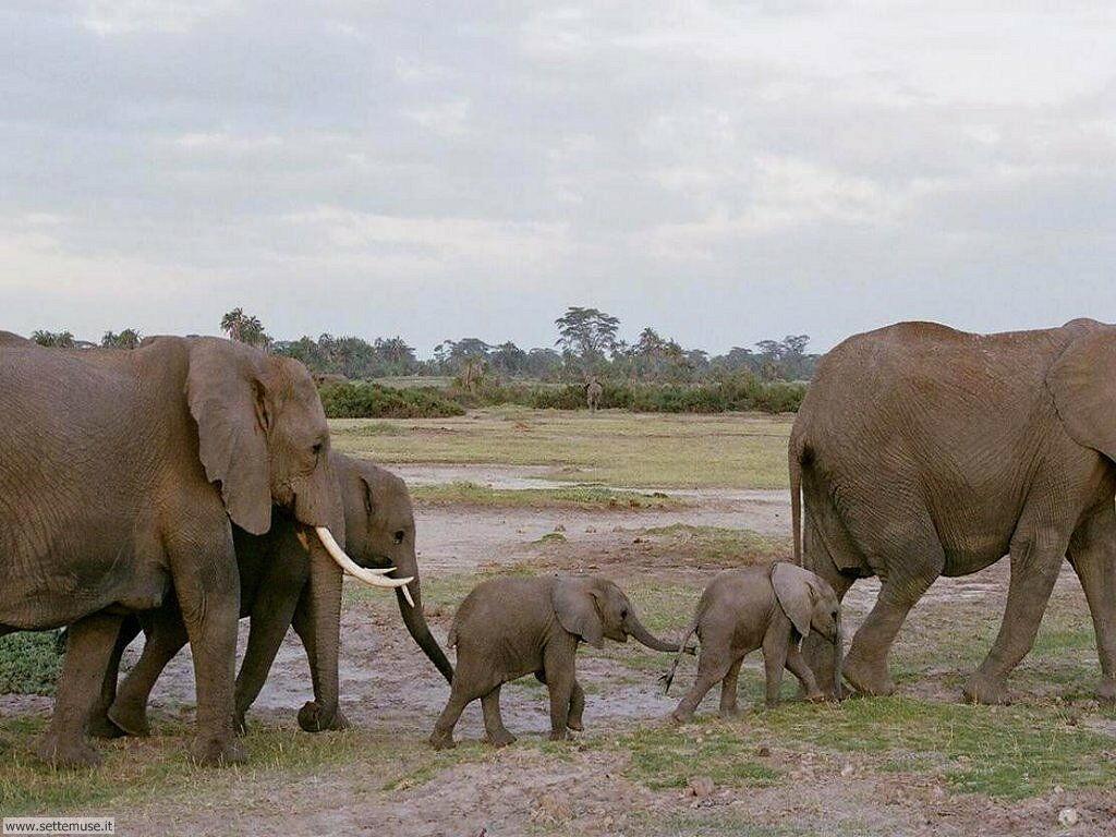 Foto Elefanti 019