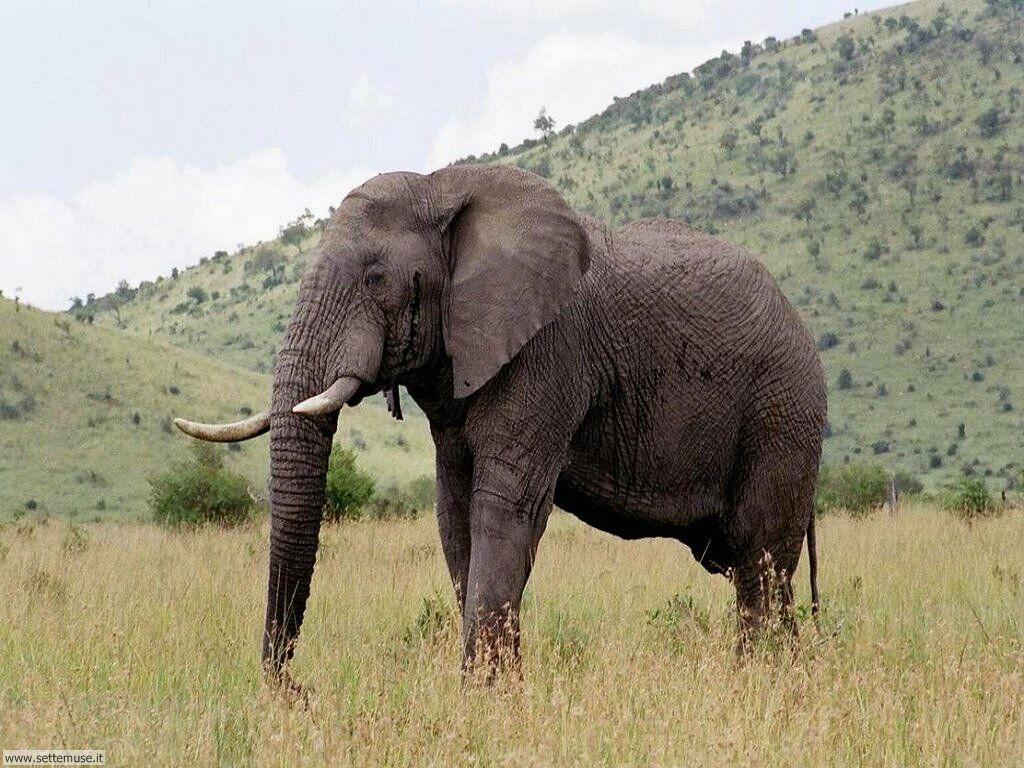 Foto Elefanti 020