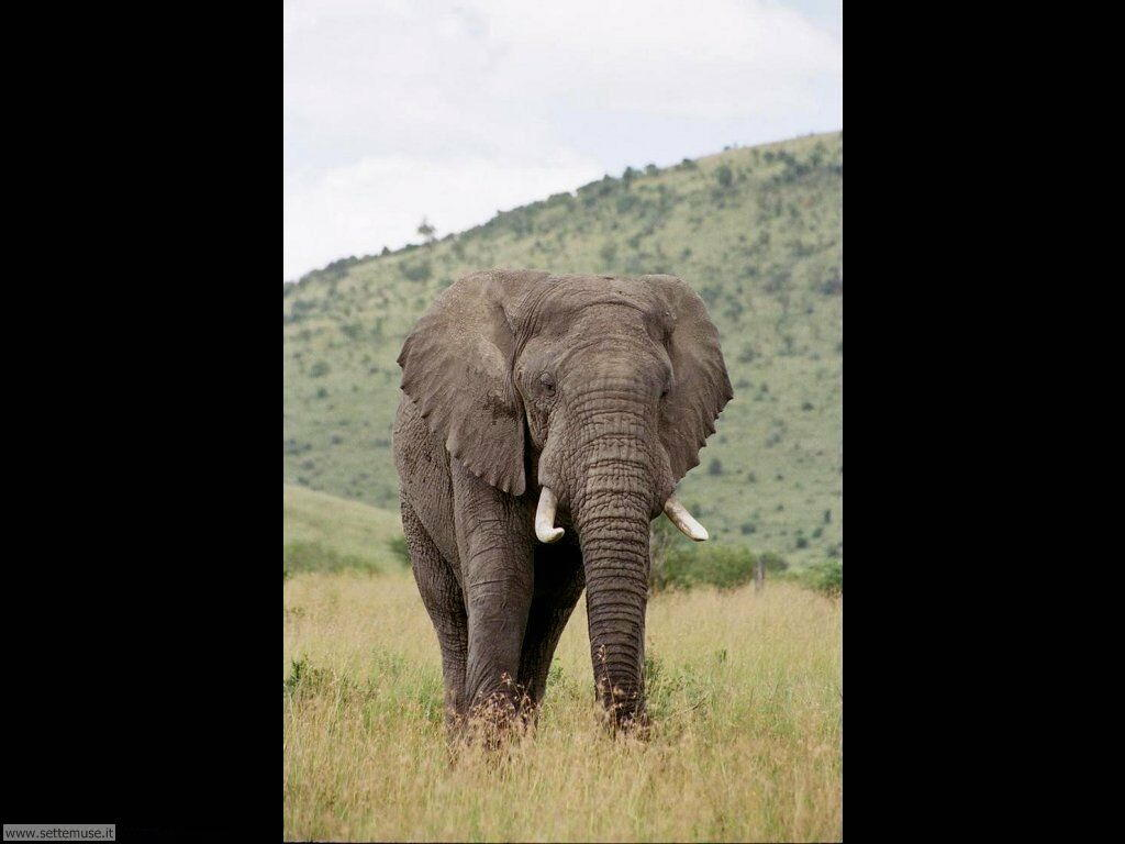 Foto Elefanti 021