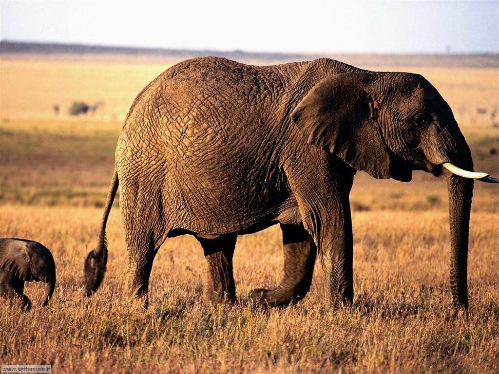 Foto Elefanti 022