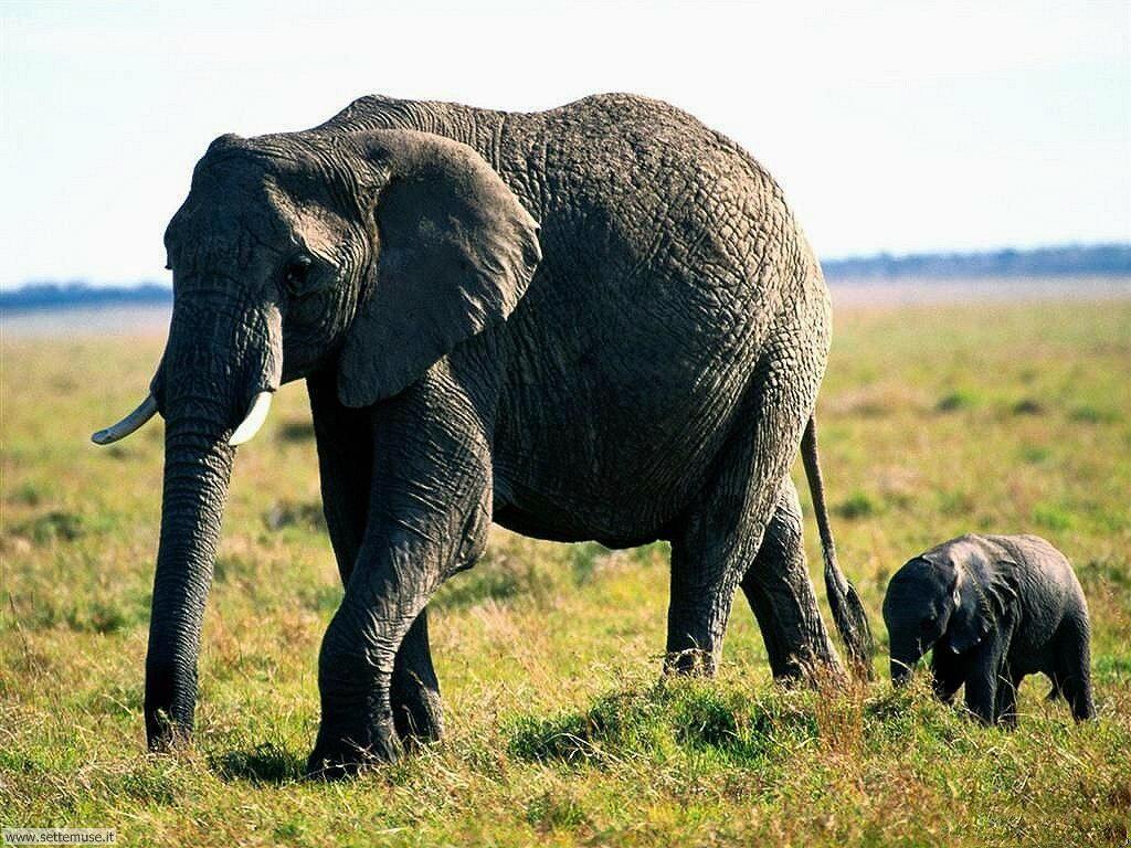 Foto Elefanti 023