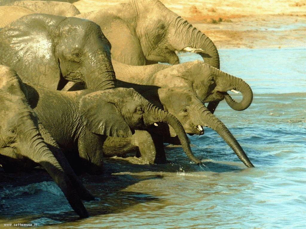 Foto Elefanti 025