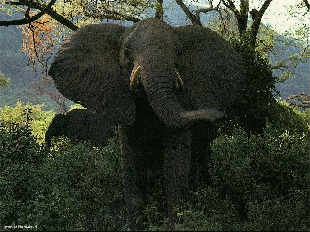 Foto Elefanti 027