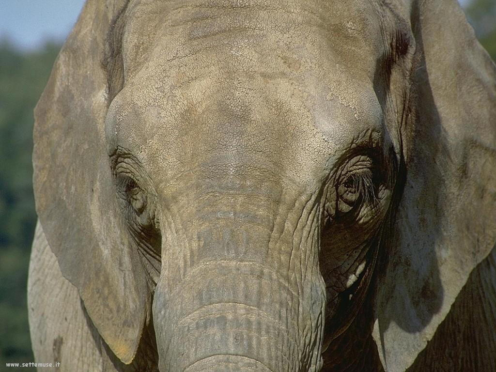 Foto Elefanti 028