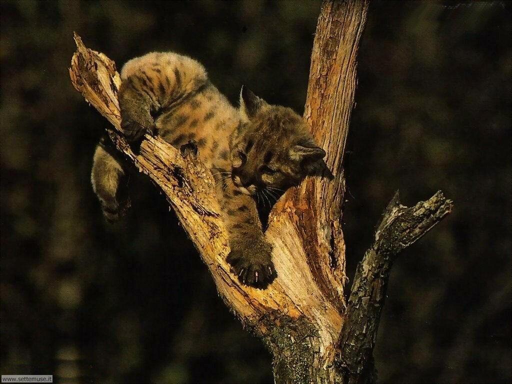 Foto di leopardo 001