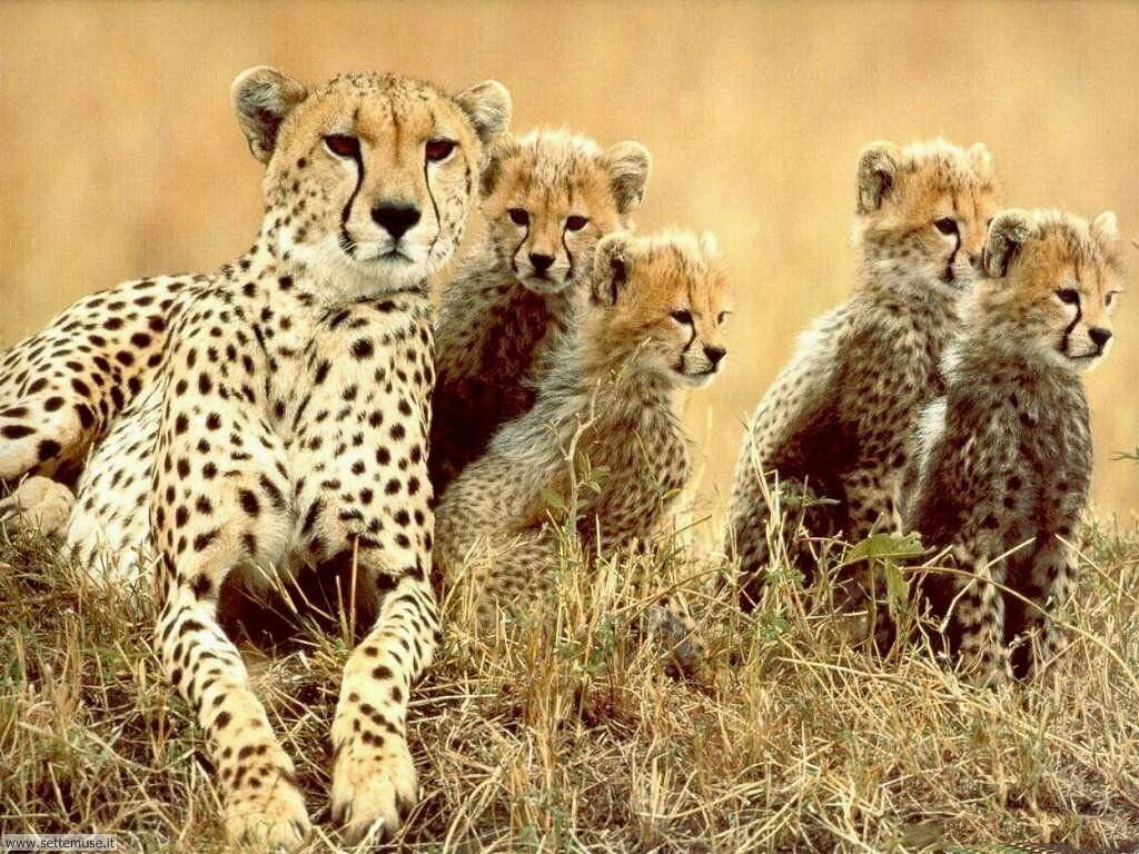 Foto di leopardo 003
