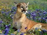 Foto sfondi felini vari