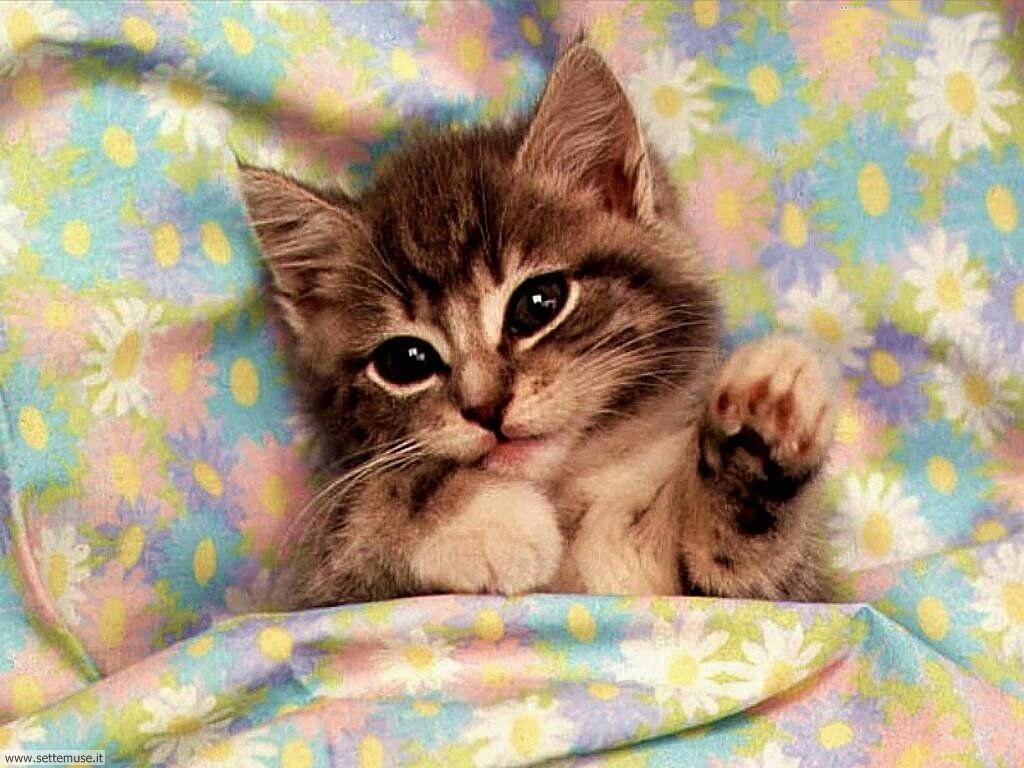 Sfondi gatti - foto gratis