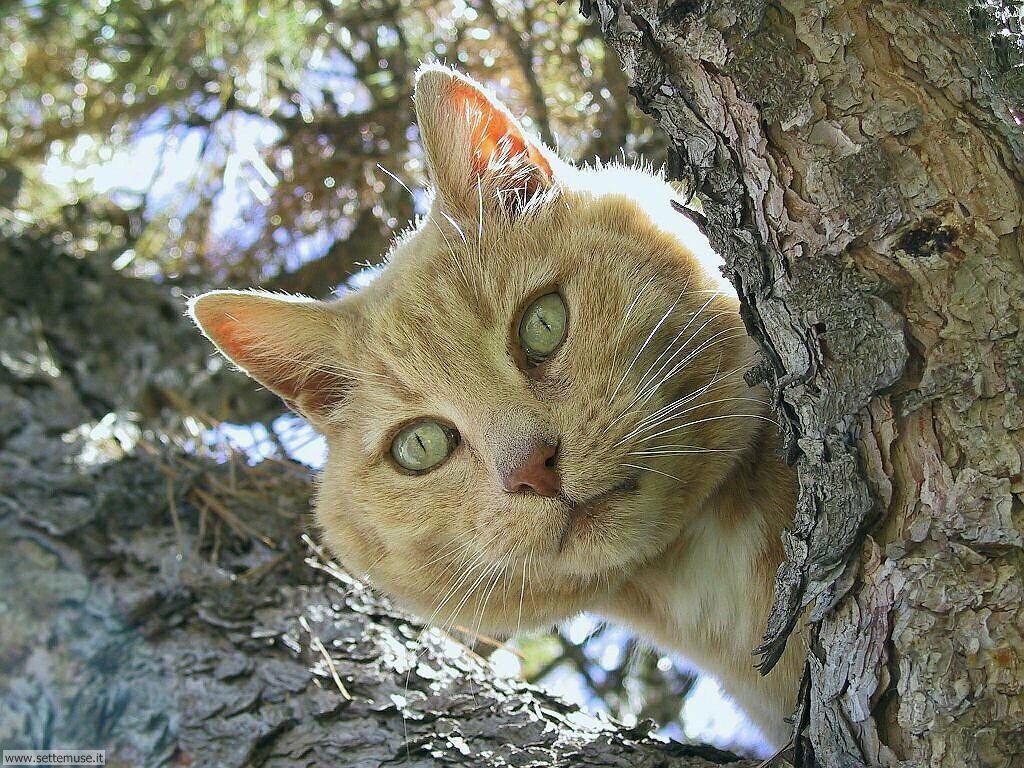 Slideshow foto gatti for Animali desktop