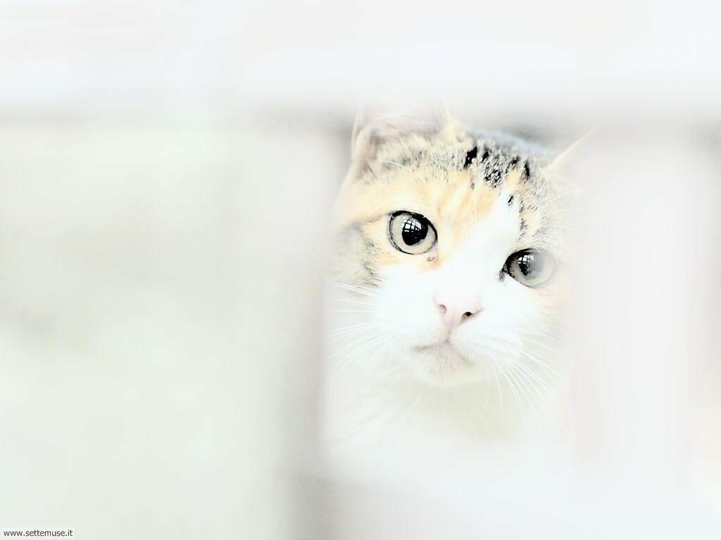 Slideshow foto gatti for Sfondi desktop gatti