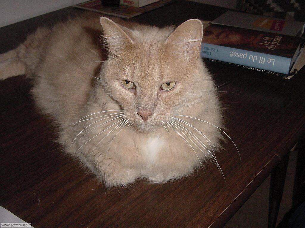 foto di gatti 039.jpg