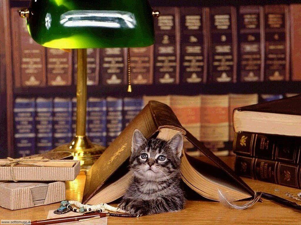 foto di gatti 040.jpg