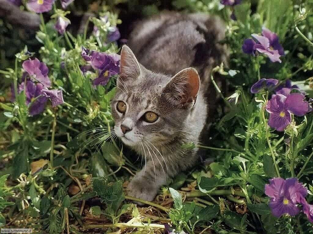 foto di gatti 041.jpg