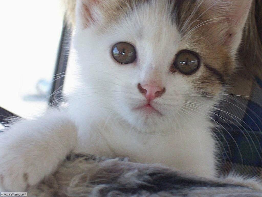 Foto gatti per sfondi pc for Sfondi gatti gratis
