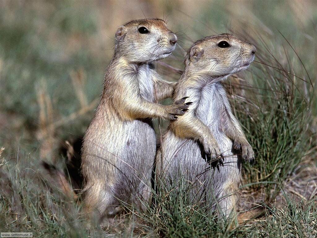 foto di piccoli mammiferi vari per sfondi