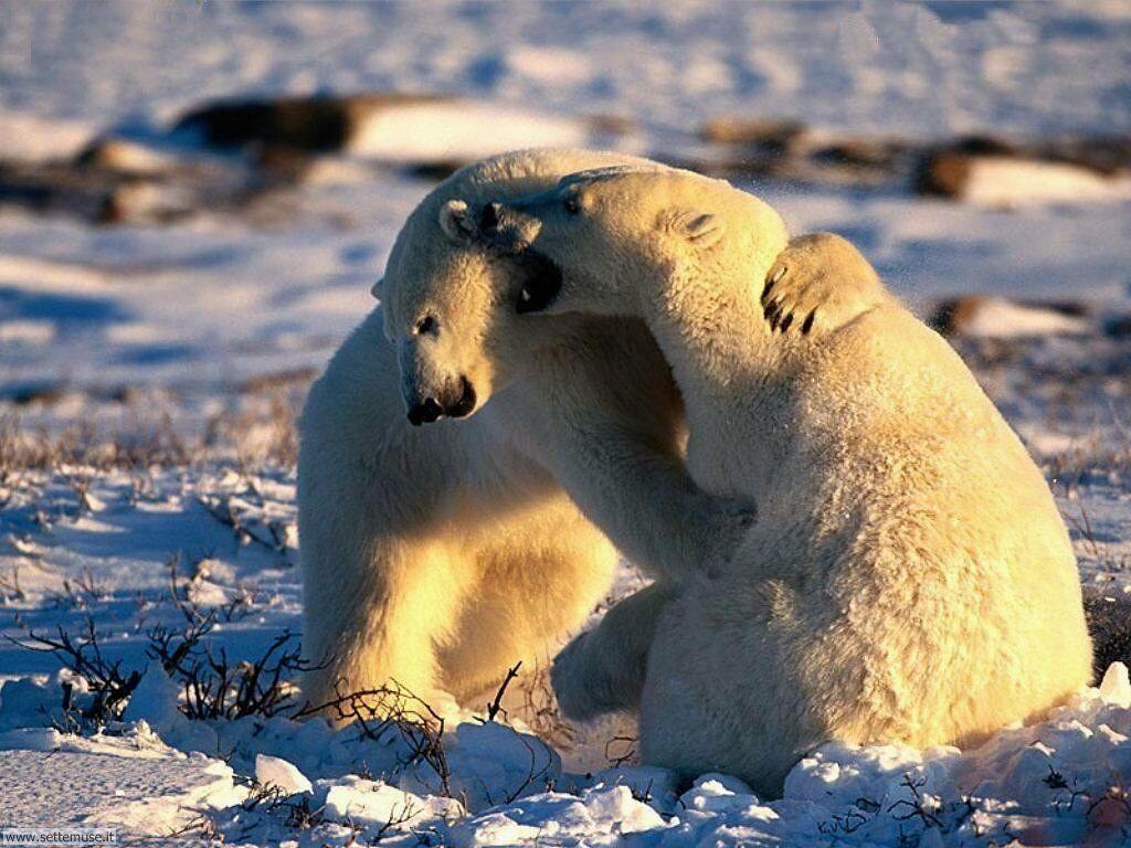 Foto di Orsi Grizzly 005