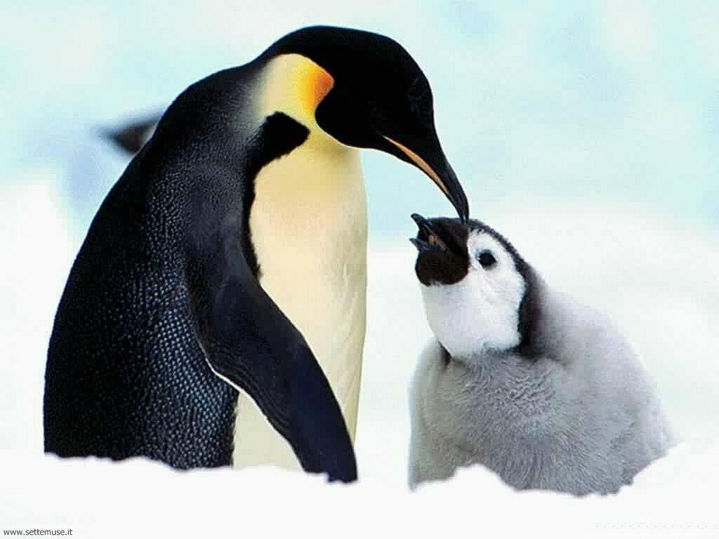Foto di Pinguini 002