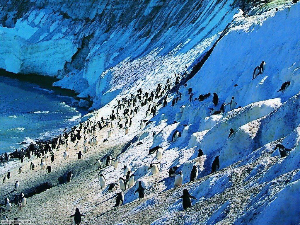 Foto di Pinguini 004