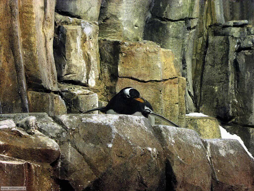 Foto di Pinguini 005