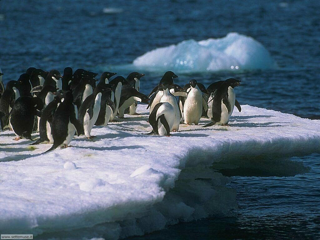 Foto di Pinguini 006