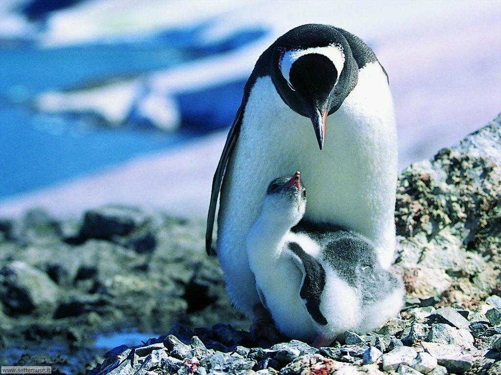 Foto di Pinguini 007