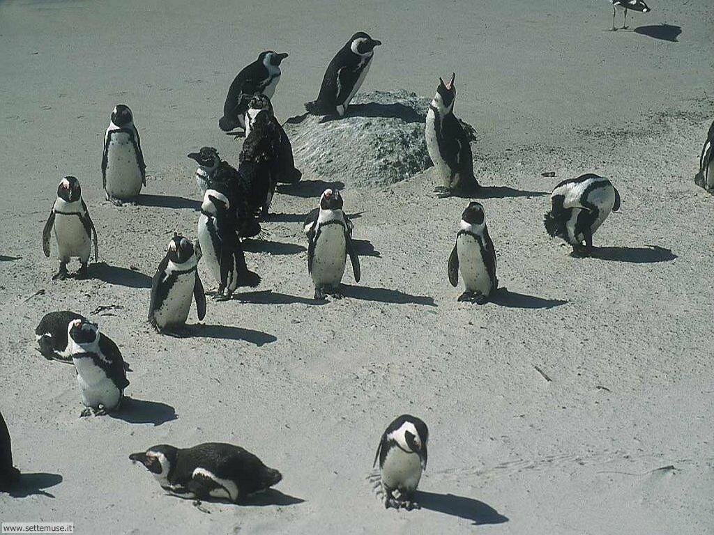 Foto di Pinguini 008