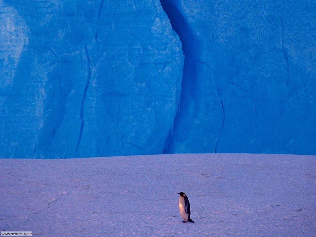 Foto di Pinguini 009