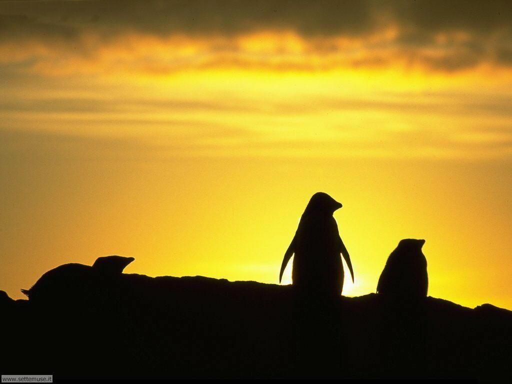 Foto di Pinguini 010