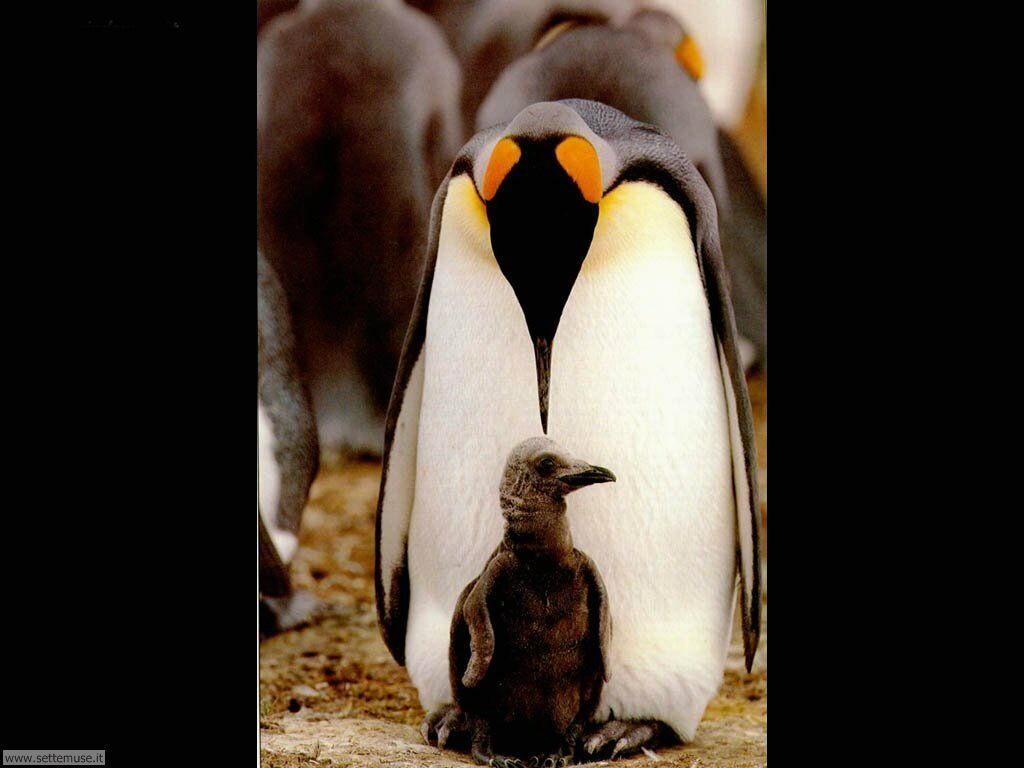 Foto di Pinguini 011
