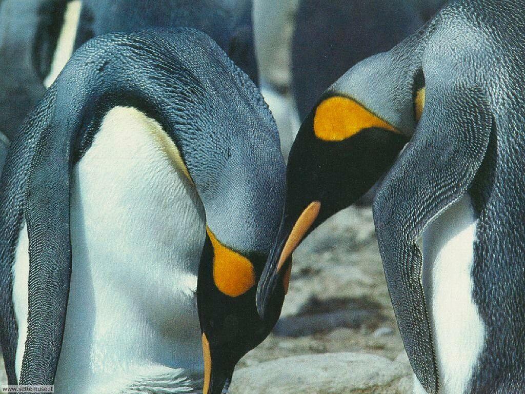 Foto di Pinguini 012