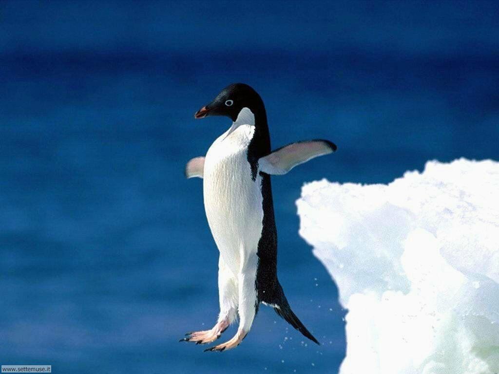 Foto di Pinguini 013