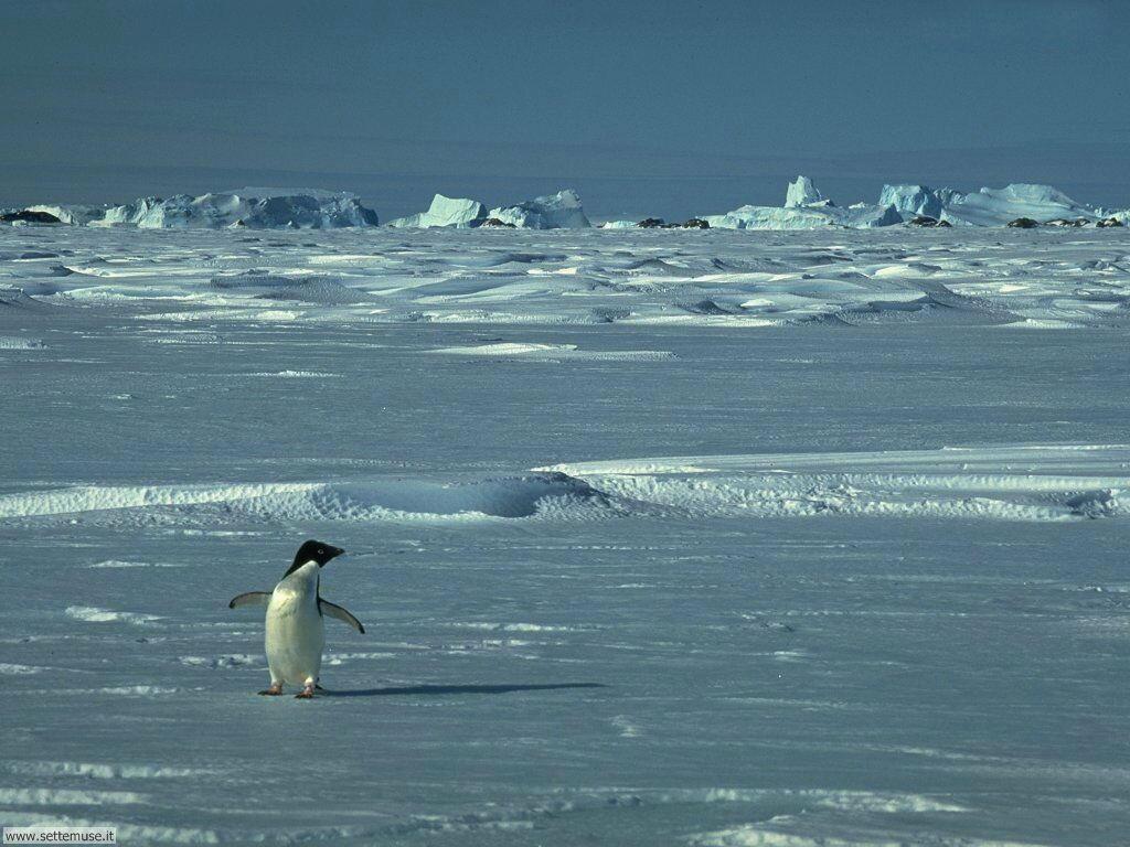 Foto di Pinguini 014