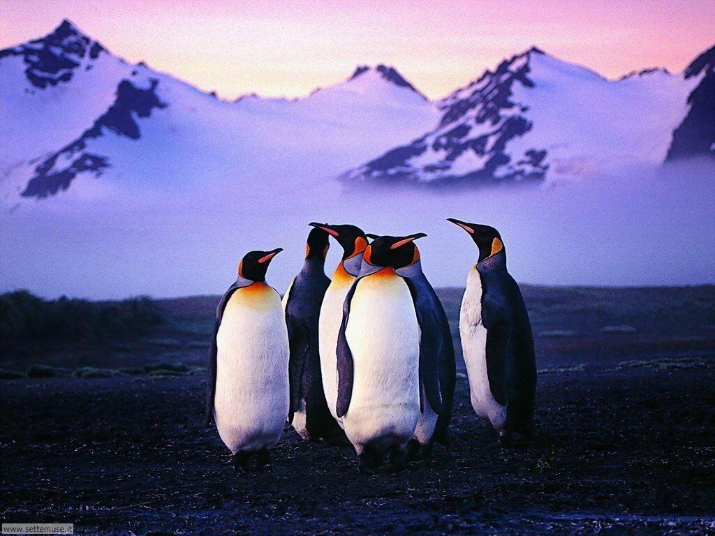 Foto di Pinguini 015
