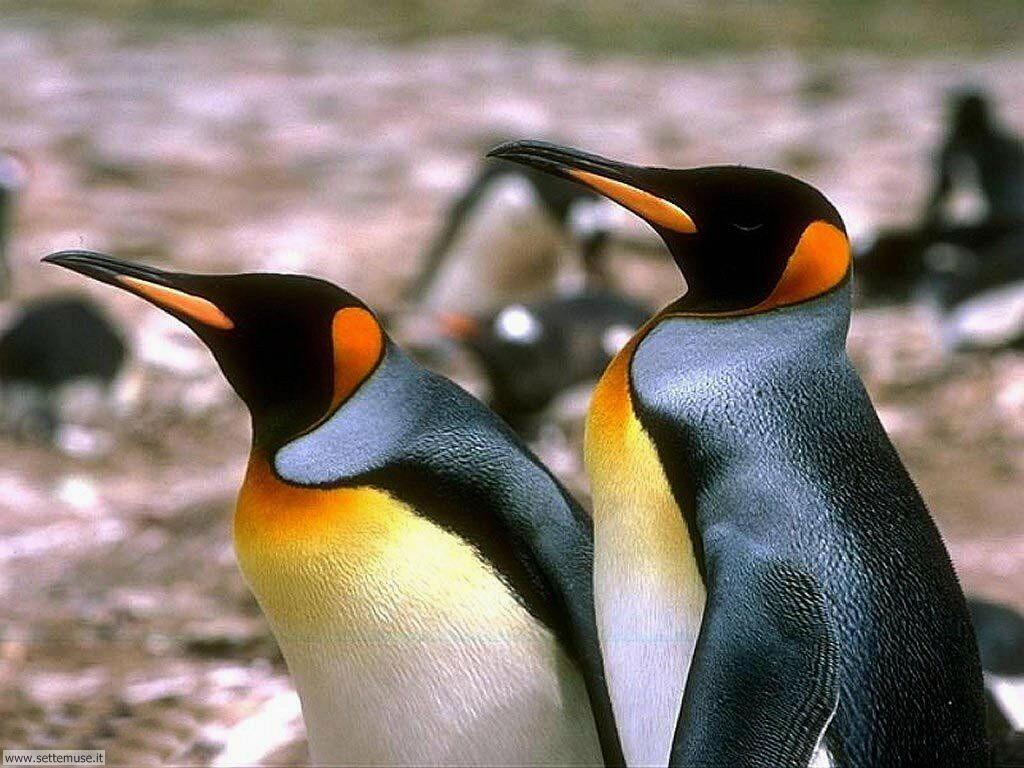 Foto di Pinguini 016