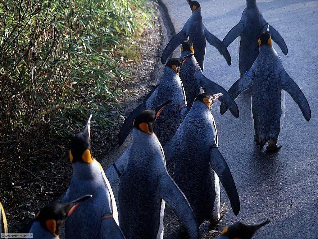 Foto di Pinguini 017
