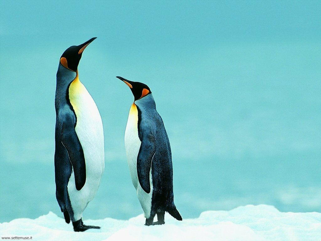 Foto di Pinguini 019